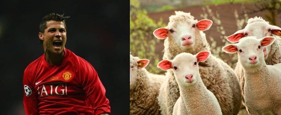 Ronaldo Pecore