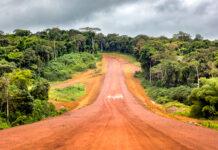 Gabon, patrimonio boschivo