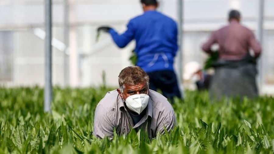agricoltura green pass braccianti